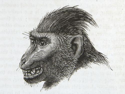 Image of Darwin-F1142-1872-zzzz-det-136-2