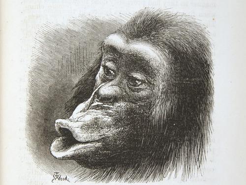 Image of Darwin-F1142-1872-zzzz-det-141