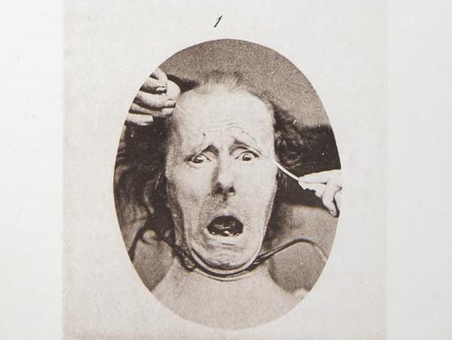Image of Darwin-F1142-1872-zzzz-det-300-a-2