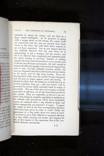 Image of Darwin-F1142-1872-051