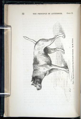 Image of Darwin-F1142-1872-052