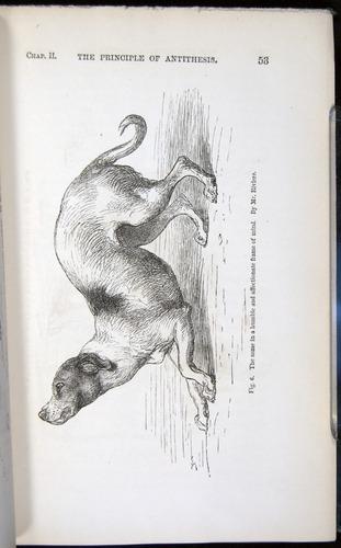 Image of Darwin-F1142-1872-053
