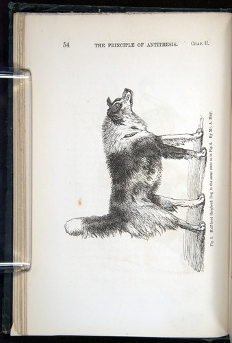 Image of Darwin-F1142-1872-054