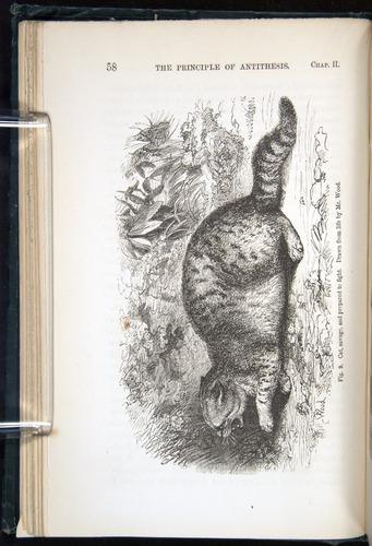 Image of Darwin-F1142-1872-058