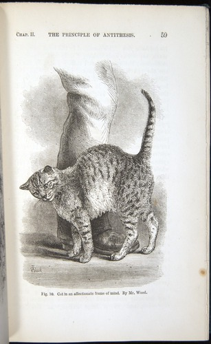 Darwin, Emotion (1872), cat