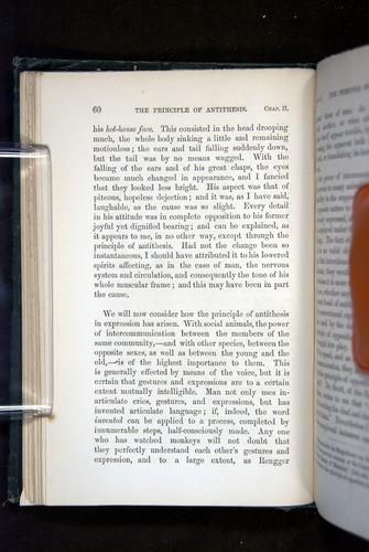 Image of Darwin-F1142-1872-060