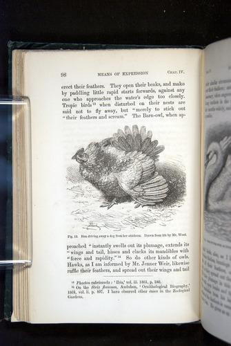 Image of Darwin-F1142-1872-098