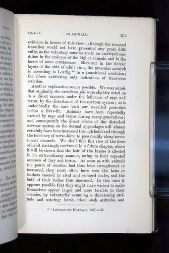 Image of Darwin-F1142-1872-103