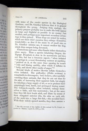 Image of Darwin-F1142-1872-105