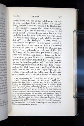 Image of Darwin-F1142-1872-107