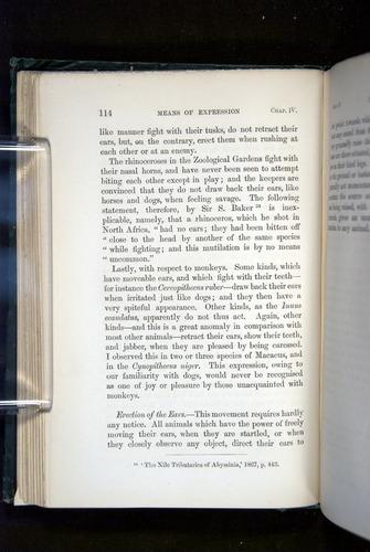 Image of Darwin-F1142-1872-114