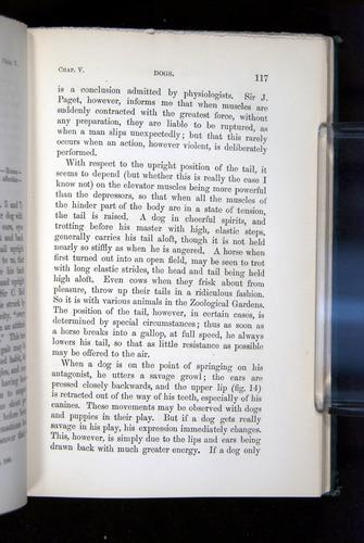 Image of Darwin-F1142-1872-117