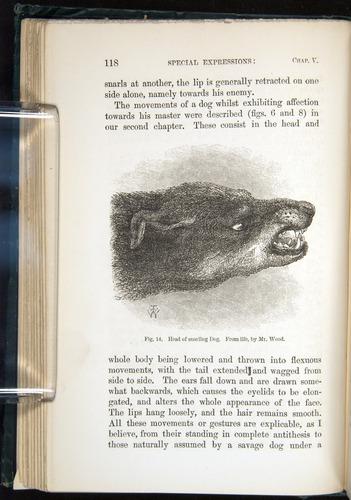 Image of Darwin-F1142-1872-118