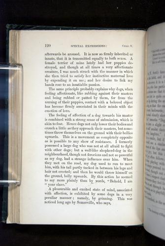 Image of Darwin-F1142-1872-120