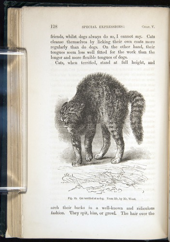 Image of Darwin-F1142-1872-128