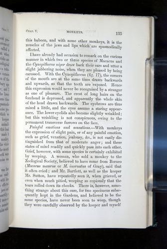 Image of Darwin-F1142-1872-135