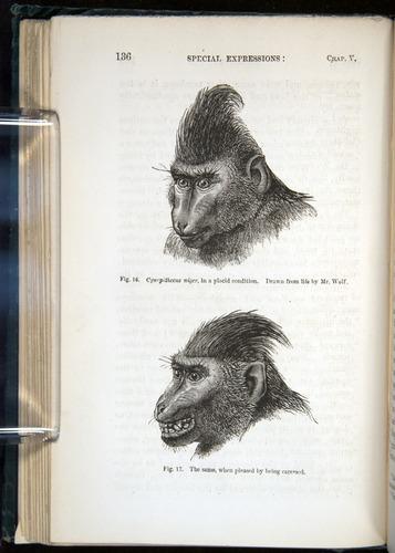 Image of Darwin-F1142-1872-136