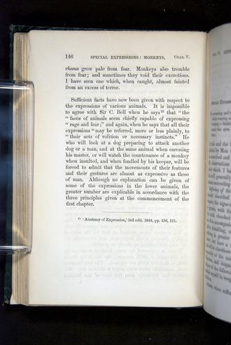 Image of Darwin-F1142-1872-146
