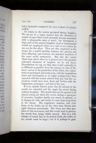 Image of Darwin-F1142-1872-207