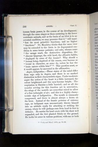 Image of Darwin-F1142-1872-246
