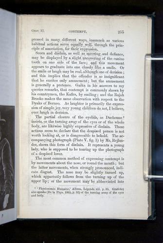 Image of Darwin-F1142-1872-255