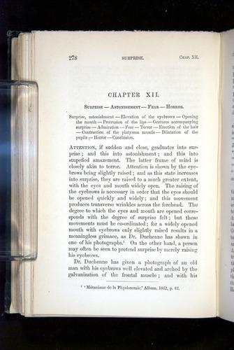 Image of Darwin-F1142-1872-278
