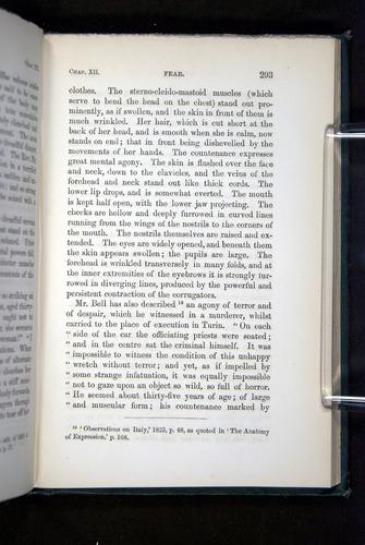 Image of Darwin-F1142-1872-293