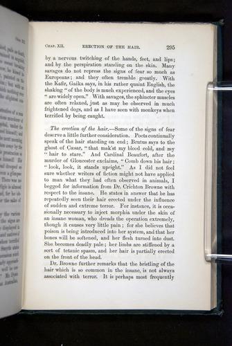Image of Darwin-F1142-1872-295