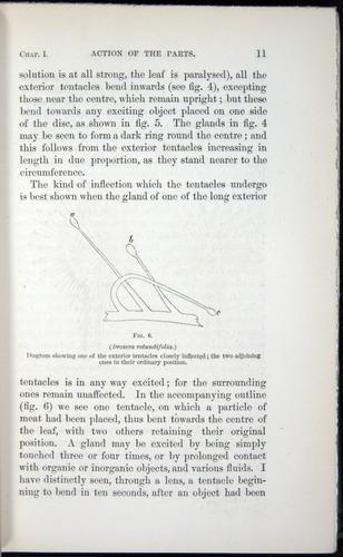 Image of Darwin-F1218-1875-00011