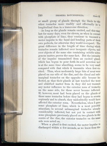 Image of Darwin-F1218-1875-00240