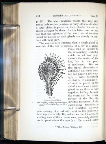 Image of Darwin-F1218-1875-00244