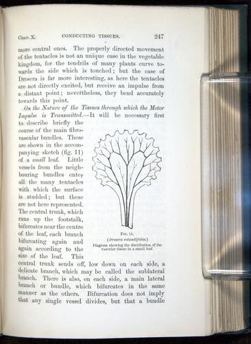 Image of Darwin-F1218-1875-00247
