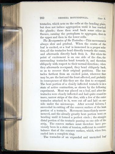 Image of Darwin-F1218-1875-00260