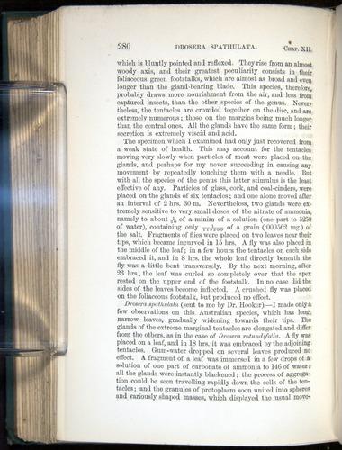 Image of Darwin-F1218-1875-00280