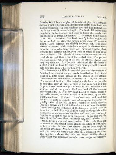 Image of Darwin-F1218-1875-00282