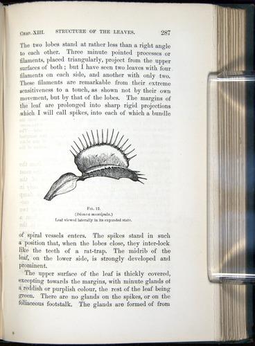 Image of Darwin-F1218-1875-00287
