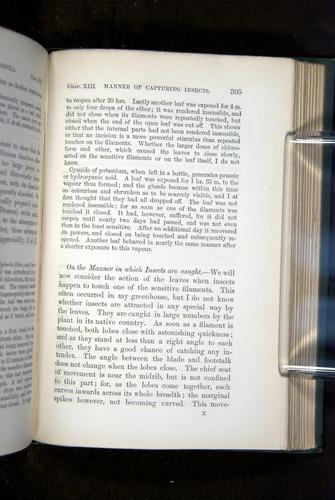 Image of Darwin-F1218-1875-00305