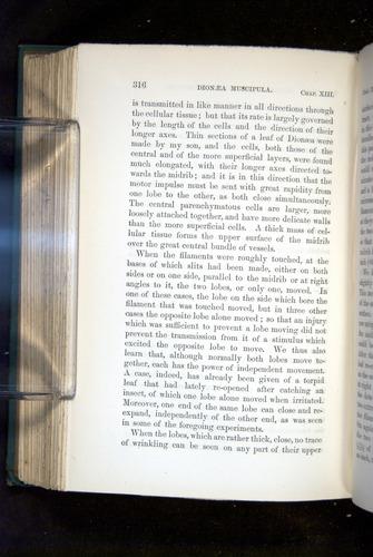 Image of Darwin-F1218-1875-00316