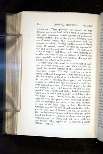 Image of Darwin-F1218-1875-00324