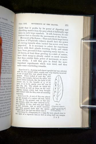 Image of Darwin-F1218-1875-00371
