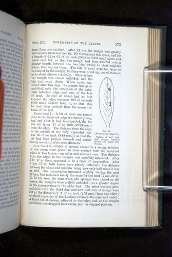 Image of Darwin-F1218-1875-00373