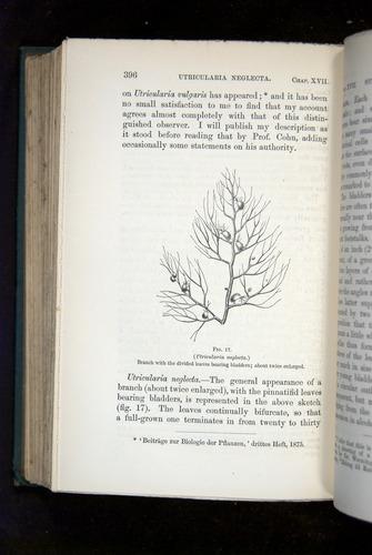 Image of Darwin-F1218-1875-00396