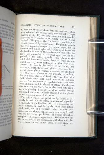 Image of Darwin-F1218-1875-00401