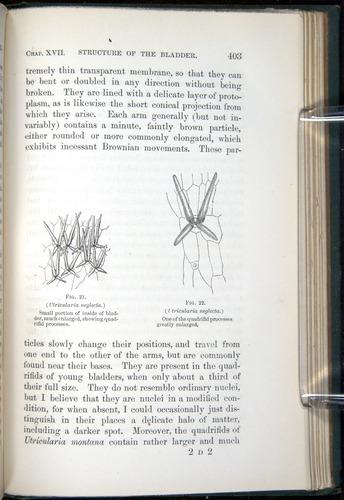 Image of Darwin-F1218-1875-00403