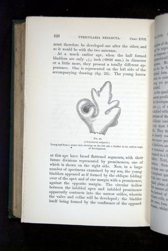 Image of Darwin-F1218-1875-00426