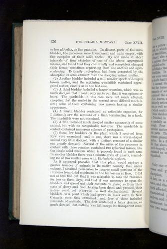 Image of Darwin-F1218-1875-00436