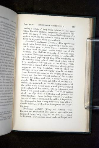 Image of Darwin-F1218-1875-00443