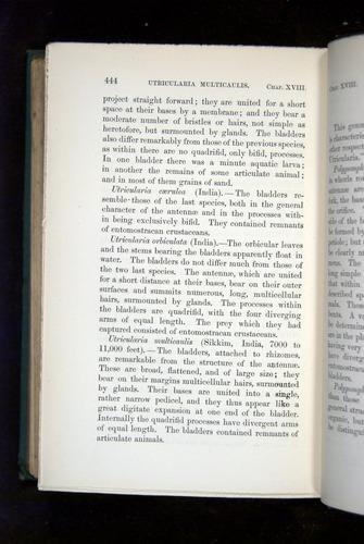 Image of Darwin-F1218-1875-00444