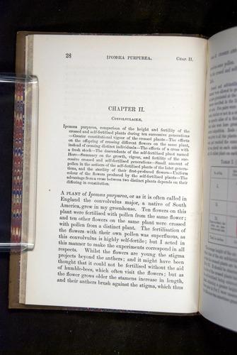 Image of Darwin-F1249-1876-028