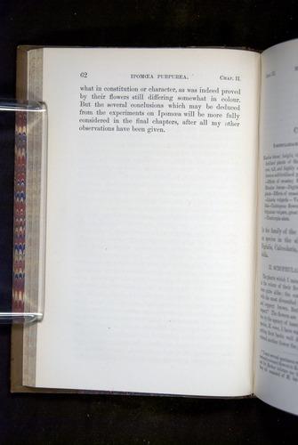 Image of Darwin-F1249-1876-062
